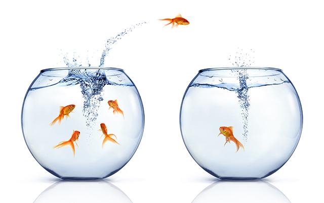 aquario-peixe